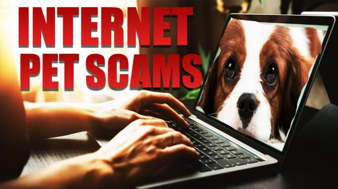 Beware online pet scams in South Africa